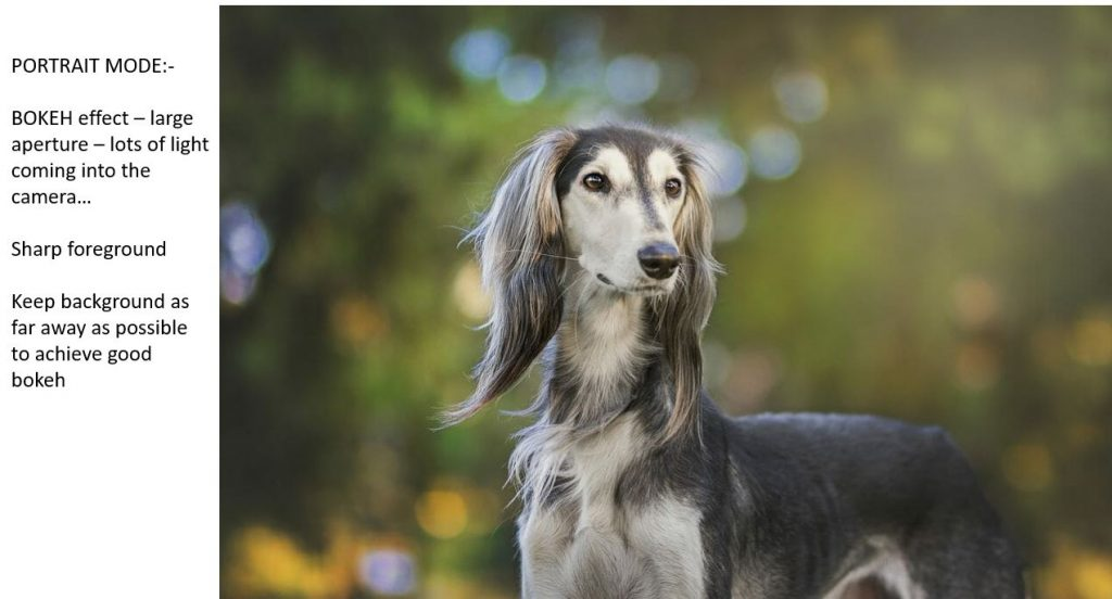 Photo of a dog taken using a shallow depth of field